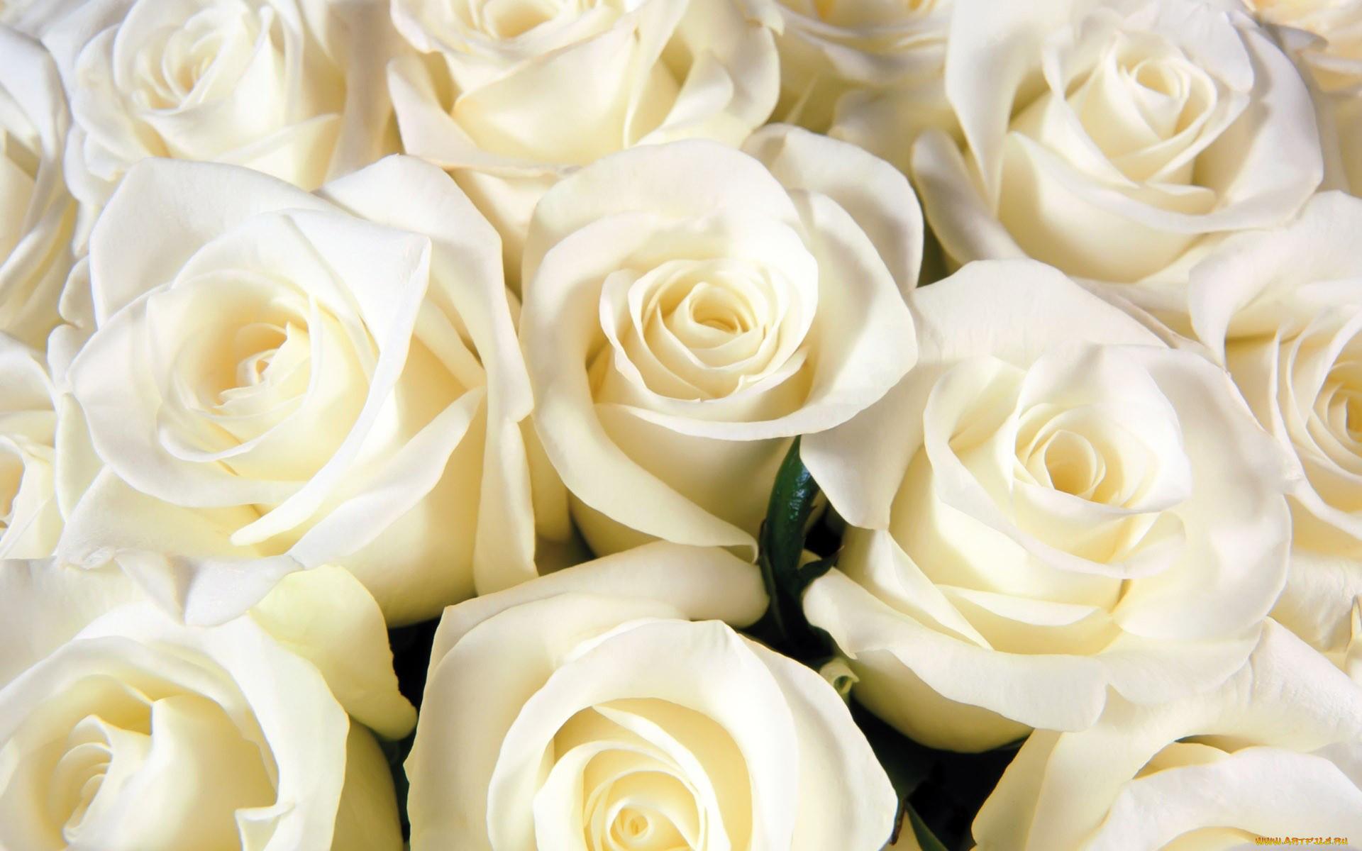 прикольные картинки на аву цветы сделанное